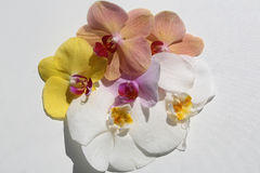 Splendid exotic orchids flower Stock Photo