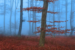 Splendid forest during fog with a fairytale look Stock Image