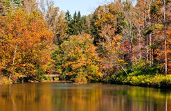 Splendid golden pond. Glorious autumn colors reflecting in bass fishing pond stock images