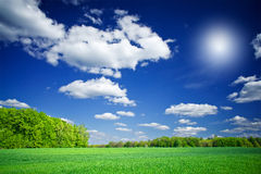 Splendid Green Field And The Blue Sky With Clouds. Royalty Free Stock Image