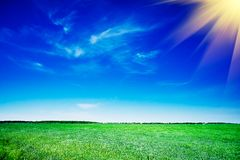 Splendid green field and the blue sky with clouds. Stock Photography