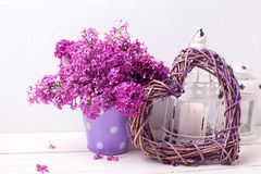Splendid lilac flowers Royalty Free Stock Images