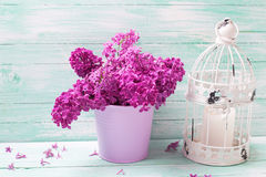 Splendid lilac flowers in  bucket, decorative lantern with candl Royalty Free Stock Photography