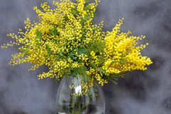 Splendid mimosa bouquet in vase Royalty Free Stock Photography