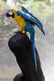 Splendid parrot in the wilderness Royalty Free Stock Images