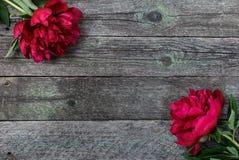 Splendid Pink Peonies Flowers On Rustic Wooden Background. Selective Focus