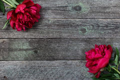 Splendid pink peonies flowers on rustic wooden background. Selective focus Stock Images