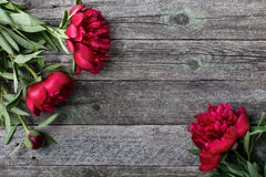 Splendid pink peonies flowers on rustic wooden background. Selective focus Royalty Free Stock Photos