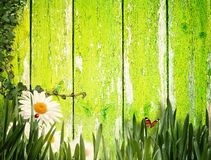 Splendid summer backgrounds. With old fence and green grass Stock Image