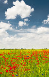 Splendid summer landscape of meadow. Stock Photography