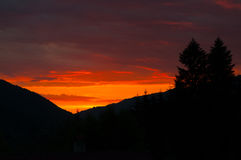 Splendid sunset over pine trees Royalty Free Stock Image