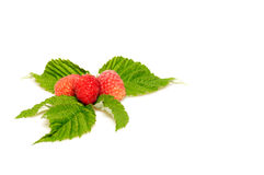 Splendid and tasty raspberries on a white. Royalty Free Stock Images
