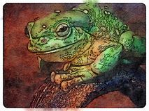 Splendid Tree Frog stock photos