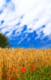 Splendid view of summer field. Royalty Free Stock Images