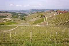 Aerial view of the vineyards of Barbaresco, Piedmont. The splendid vineyards of Barbaresco, in the province of Cuneo in the Italian region of Piedmont royalty free stock photography