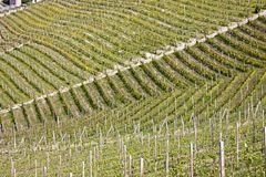 Aerial view of the vineyards of Barbaresco, Piedmont. The splendid vineyards of Barbaresco, in the province of Cuneo in the Italian region of Piedmont stock image