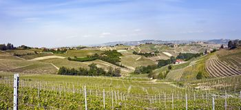 Aerial view of the vineyards of Langhe, Piedmont. royalty free stock images