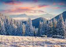 Splendid winter sunrisise in Carpathian mountains with trees and Stock Photography