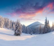 Splendid winter sunset in Carpathian mountains with snow covered. Fir trees. Colorful outdoor scene, Happy New Year celebration concept. Artistic style post Stock Image