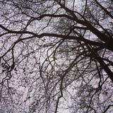 Splendido di verde dell'albero di estate della primavera bello Fotografie Stock