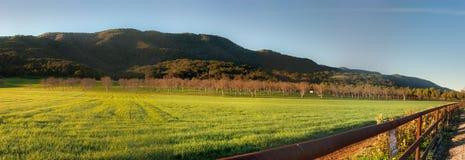 Splendor beyond the grass Stock Image
