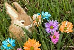 splendore dell'erba Fotografie Stock