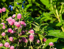 The splendour of summer Royalty Free Stock Photos