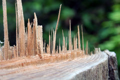 Splintered wood Stock Photo