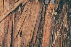 Free Splintered Wood Texture And Background. Closeup View Of Splinter Wood Texture. Abstract Texture And Background For Designers. Royalty Free Stock Photo - 108578545