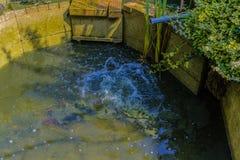 Splish飞溅在庭院池塘 库存图片