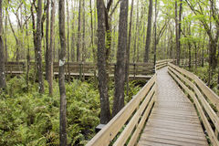 Split Boardwalk At Slough Preserve Royalty Free Stock Photography