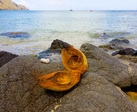 A split coconut shell in the windward islands Royalty Free Stock Photography