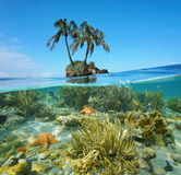 Split coconut trees islet and corals underwater Royalty Free Stock Image