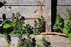 Old weathered wooden pallet and flowers Royalty Free Stock Photos