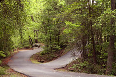 Split curving roads through a forest Stock Photos