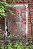 Split door window moss vegetation wet Royalty Free Stock Image