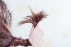 Split ends of hair Stock Image