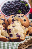 Split fresh huckleberry muffin Stock Photos