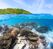 Split. Level shot of coral reef underwater and green island on the surface Stock Photography