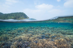 Split-level underwater shot of healthy coral reef in clear tropical water, Okinawa, Japan Royalty Free Stock Photography
