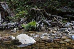 Split logs next to the river Eresma Stock Photos