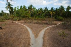 A split path behind palm trees ,Nusa Penida, Indonesia Stock Photography