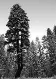 Split pondo in the forest Stock Images