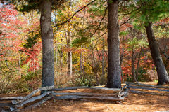 Split Rail Fence And Autumn Leaves Royalty Free Stock Photography