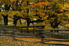 Split rail fence and Autumn trees Stock Photography