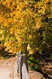 Split Rail Fence into Fall Trees Stock Photography
