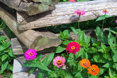 Split Rail Fence and Flowers royalty free stock photography