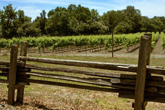 Split-rail fence and grapevines Royalty Free Stock Image