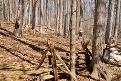 Split rail fence and tapped trees heart of sugar bush Royalty Free Stock Photos