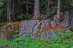 Split Rock. Growing tree roots have split a giant granite boulder Stock Photography